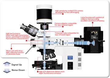 BX51/61OLYMPUS生物顯微鏡