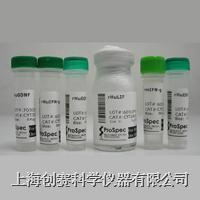 Recombinant Human VEGF165|重組人血管內皮生長因子 C22-105-05