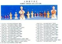 人體解剖模型|男性軀干解剖模型28CM GD-0208A