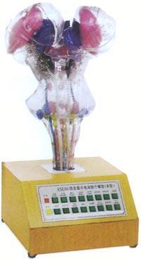人體解剖模型|電動腦干模型 GD/A18216