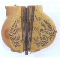 上等靜止期女性乳房模型 GD/A15110