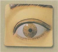 上等光控瞳孔調節模型  GD/A17107