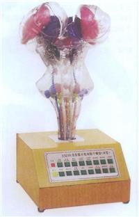 上等電動腦幹模型 GD/A18216
