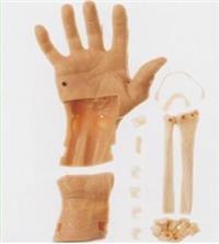 腕關節鏡檢查模型  GD/LV76