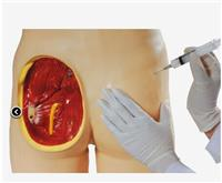 上等臀部肌內注射與解剖結構模型  GD/HS10C