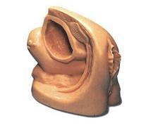 上等女性導尿外生殖器模型 KAH-A2