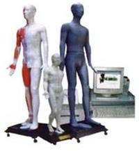 中醫針灸教學模型 JAW-100E