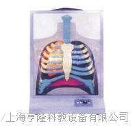 電動人體呼吸係統模型 HL-dd