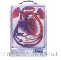 電動心髒搏動與血液循環模型 HL-ddxz