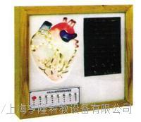 心髒傳導係電動模型    HL-xzcd