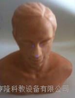 針灸頭部訓練模型 ZK1000TS