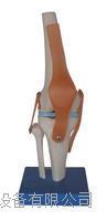膝關節模型 KAH/A11201-5