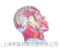 顏麵淺層肌肉神經血管 KAH2120