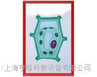 植物細胞浮雕模型 KAH2079-36