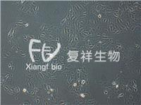CCL-33 PK-15 猪肾细胞系 CCL-33