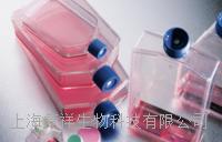 人微血管內皮細胞株 HMEC-1