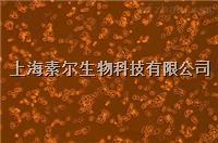 HT-22細胞株(素爾)151223