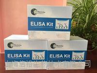 人封閉蛋白5(CLDN5)試劑盒