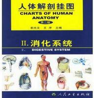 人體解剖掛圖-消化系統(25張) 紙制