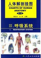 人體解剖掛圖-呼吸系統(12張) 紙制