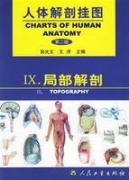 人體解剖掛圖-局部解剖(64張) 紙制