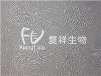HSF 人皮肤成纤维样细胞 HSF