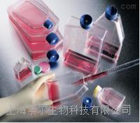 HMF细胞,7630人乳腺成纤维细胞(HMF细胞)