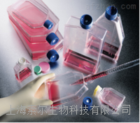 DT40细胞,鸡淋巴瘤细胞(DT40细胞)